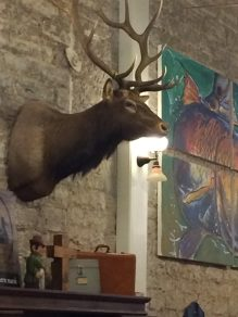 mesquite-deer
